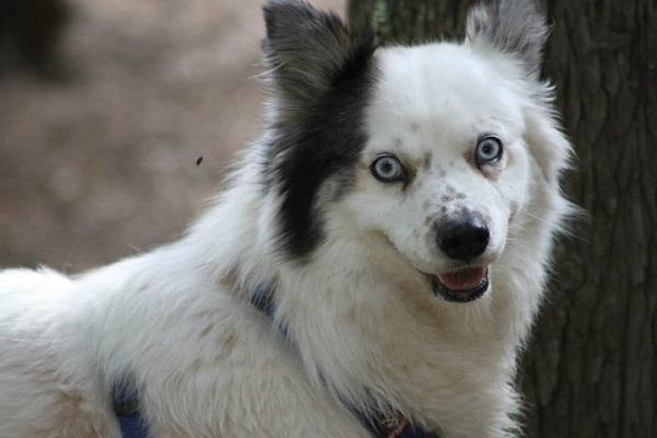 Día del perro sin raza 6